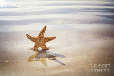 Starfish On The Beach Poster by Jane Rix