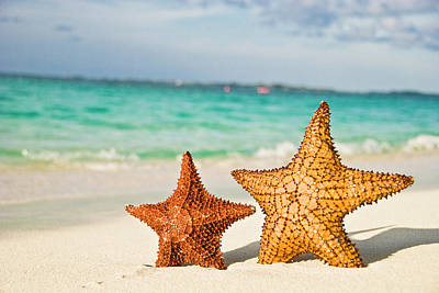 Starfish On Tropical Caribbean Beach Poster