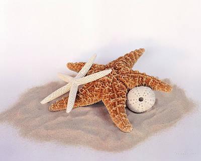 Starfish Still Life Poster