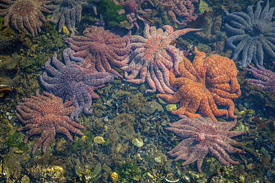 Starfish Poster by Wild Montana Images