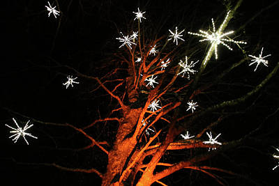 Stars In The Tree Poster