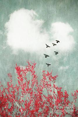Startled Poster by Priska Wettstein