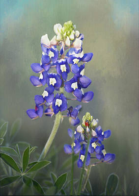 Poster featuring the photograph State Flower Of Texas by David and Carol Kelly