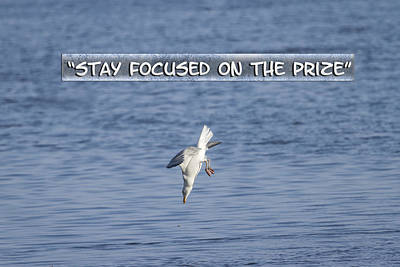 Stay Focused On The Prize Poster by Thomas Young