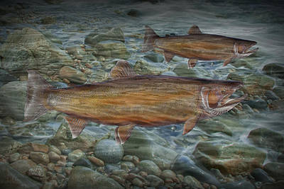 Steelhead Trout Fall Migration Poster