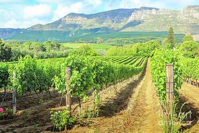 Stellenbosch Wine Farm Poster