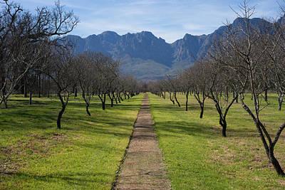 Stellenbosch Wineries Poster