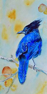 Steller's Jay On Aspen Poster by Beverley Harper Tinsley