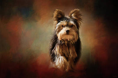 Stepping Into Autumn Yorkshire Terrier Art Poster