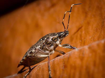 Stink Bug Poster