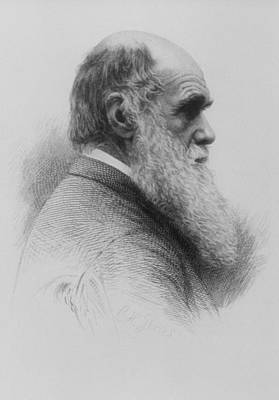 Stipple Engraving Of Charles Darwin As An Old Man Poster by National Library Of Medicine