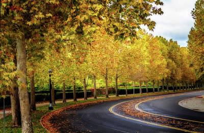 Stockton Street In Autumn Poster