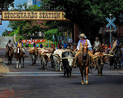 Stockyards Cattle Drive Poster by David and Carol Kelly