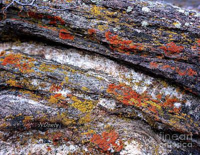 Stone And Lichen Poster
