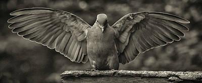 Stone Dove Landing Poster