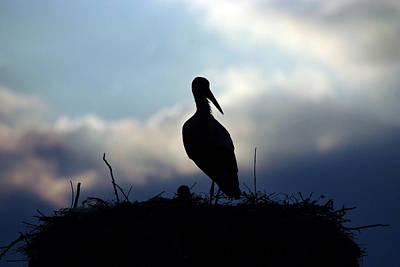 Stork In Evening Light Poster