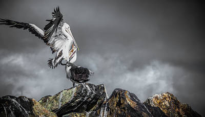Storm Birds Poster
