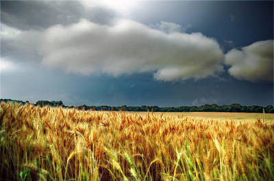 Storm Over Ripening Wheat Poster