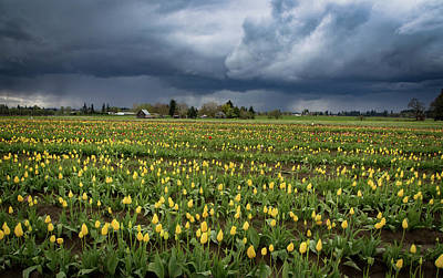 Storm Over Tulips Poster