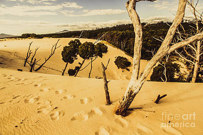 Strahan Sand Dune Landscape Poster by Jorgo Photography - Wall Art Gallery