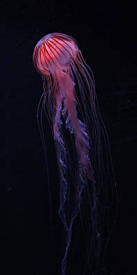 Poster featuring the photograph Strawberry Pink Jellyfish - Extra Tall by Debi Dalio