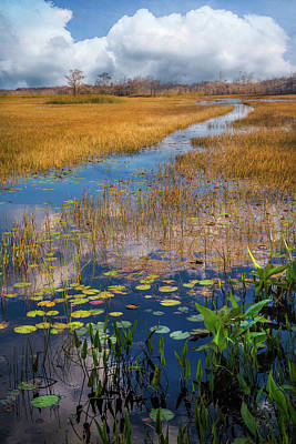 Poster featuring the photograph Stream Through The Everglades by Debra and Dave Vanderlaan