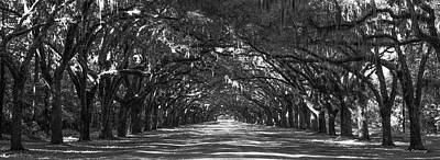 Strength In Numbers Wormsloe Plantation Art Poster
