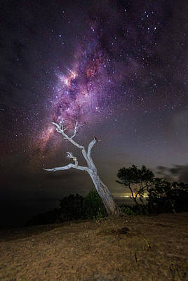 Striking Milkyway Over A Lone Tree Poster