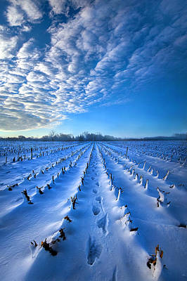 Strolling Between The Rows Poster by Phil Koch