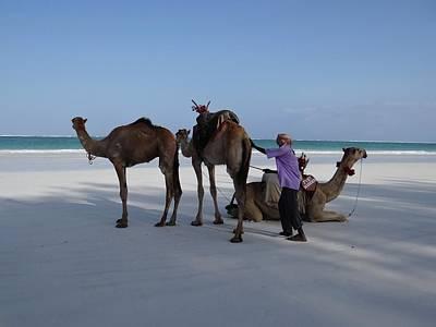 Stubborn Wedding Camels Poster
