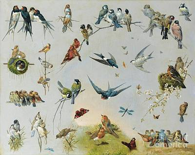 Studies Of Birds Poster by MotionAge Designs