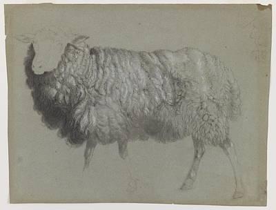 Study Of A Ewe Poster