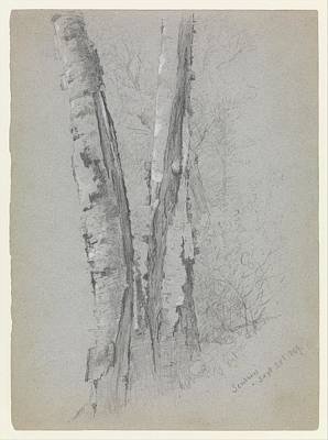 Study Of Birch Trunks Scribners' Poster by Jervis McEntee
