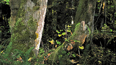 Stump Wyeth Poster