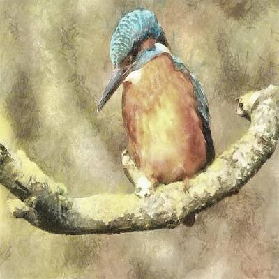 Stunning Kingfisher In Watercolor Poster