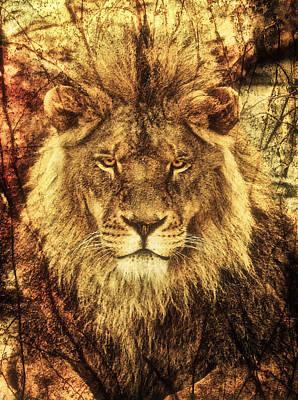 Subtle Lion Poster