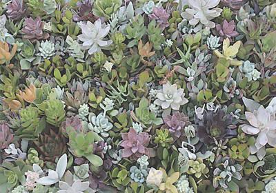 Succulent 8 Poster by David Hansen