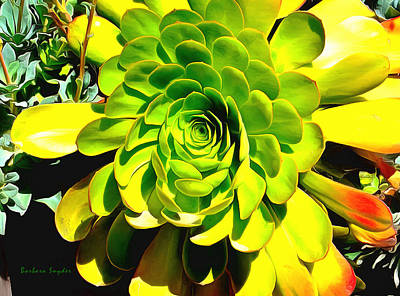 Succulent Close Up Poster by Barbara Snyder