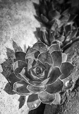 Succulent Detail Poster by Jean Noren
