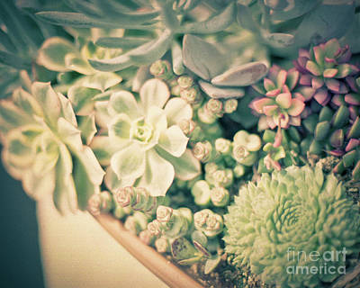 Poster featuring the photograph Succulent Garden by Ana V Ramirez