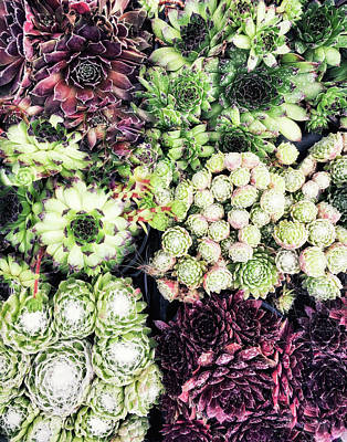 Succulent Plants Background  Poster