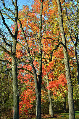 Poster featuring the photograph Sugar Maple Brilliance by Ray Mathis