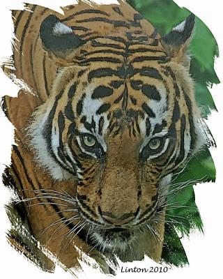 Sumatran Tiger Poster by Larry Linton