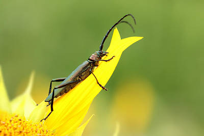 Summer Beetle Poster