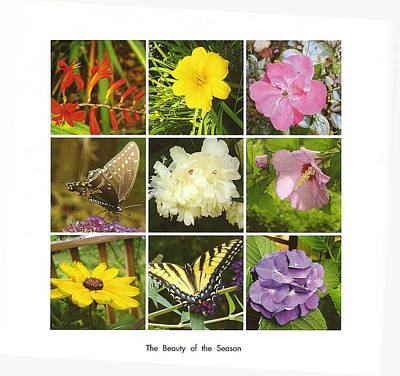 Poster featuring the photograph Summer Botanical Collage by Margie Avellino