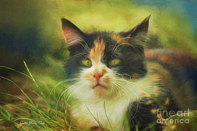 Poster featuring the photograph Summer Cat by Jutta Maria Pusl