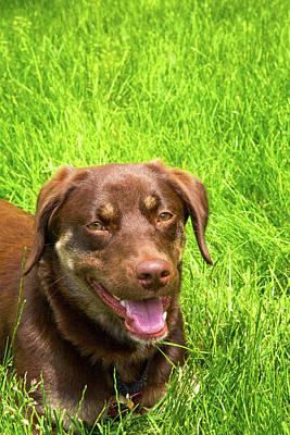Summer Dog Poster