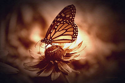 Summer Floral With Monarch Butterfly 01 Poster