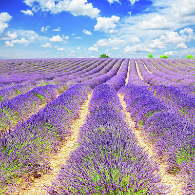 Summer In Provence Poster by Anastasy Yarmolovich