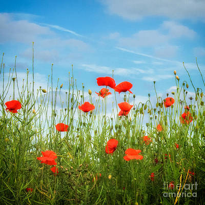 Summer Poppies Poster by Janet Burdon
